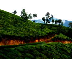 Honeymoon In Vagamon